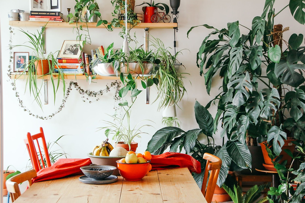 Greenery and plants and decor on hanging shelves by an interior designer