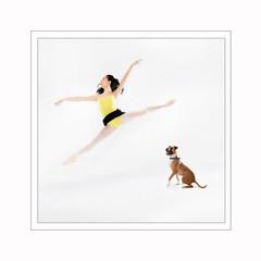Ballet Dog Photography.jpg