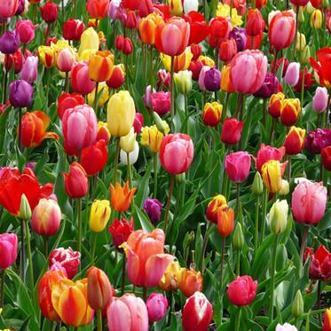 Como ter flores lindas para a Primavera!