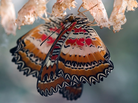 The Butterfly Will Emerge