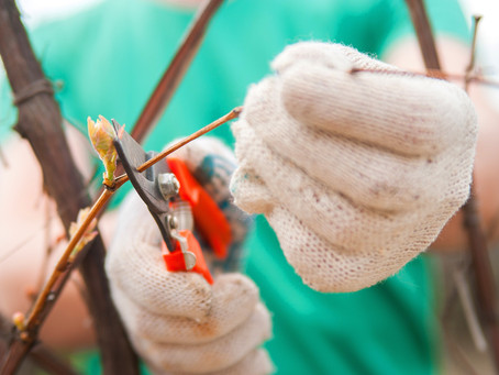Spring—Ironically, a Time for Pruning