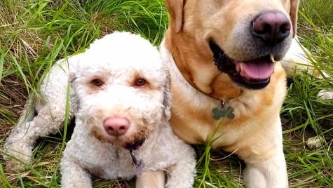 Ginger e Buck felici dopo una passeggiata nel bosco