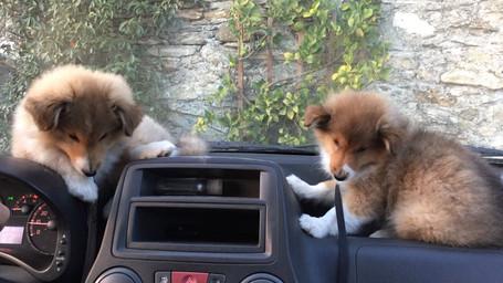 allora, andiamo a fare un giro?