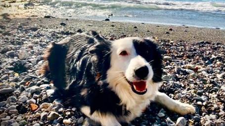 Luna felicissima in spiaggia