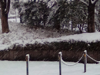今日は雪ですが…