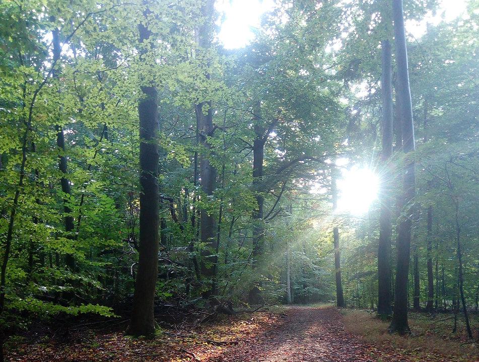 skov med lys.jpg