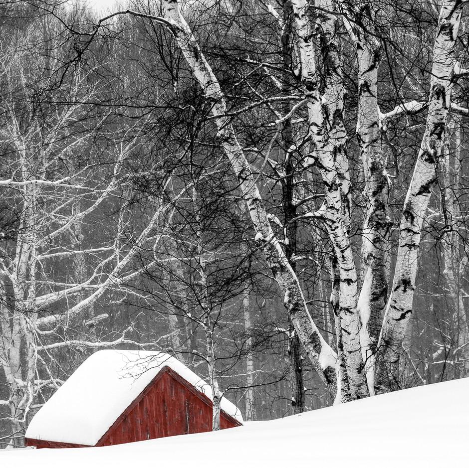 Among the Birches.jpg
