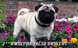 ВИНСЕНТ-4