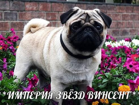 """Выставка собак всех пород ранга Чемпион РФЛС """"Знай наших"""""""