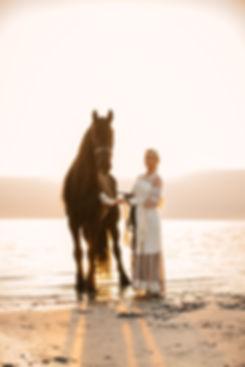 Häst och ryttare fotografi