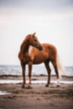 Häst fotograf