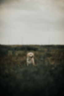 Hund fotograf