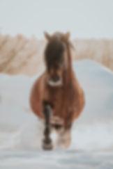 Vinter häst