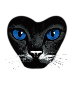 blue eyes cat.png