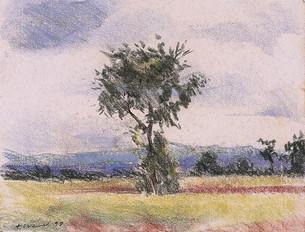 L'arbre, sud du mali