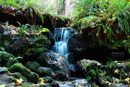 Trillium Falls | Orick, CA.
