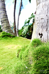 Coconut Heart   Hawaii.
