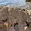 Thumbnail: Collier buffalo or