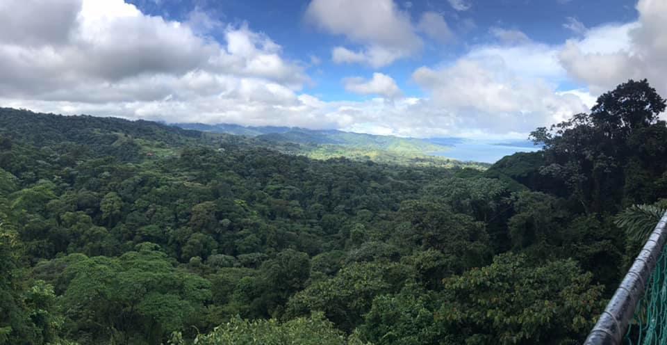 Rain Forest Walks!