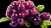 Verdaderas frutas 100% Naturales