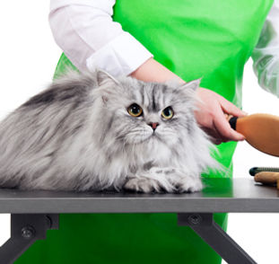 Dog grooming Sussex
