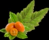 Kumquats framing