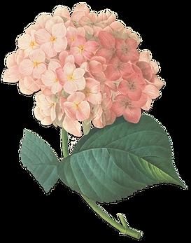Aliaga floristas