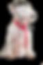ORDER EZ GROOM PET SHAMPOO ON LINE