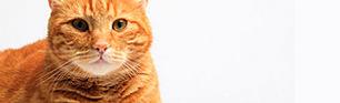 Veterinary pharmacy online