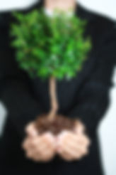 Bonsai tree to represent the growth and expansion Roelens Solicitors is always looking to achieve