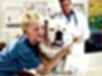 healthy pet online