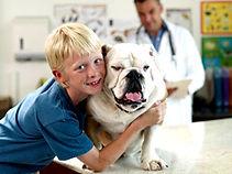 Pet Medical Care