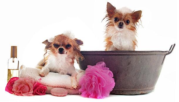 The Posh Pet Dog And Cat Salon Grand Rapids Mi