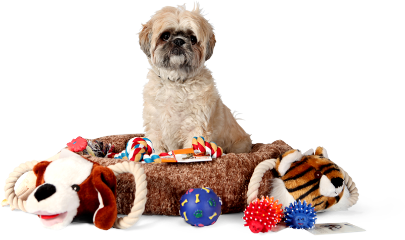 Auckland at home pet minding, at home pet sitting, dog walking, cat, pet sitter, auckland pet sitting