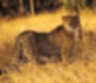 Xplore South Africa Leopard