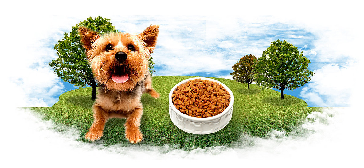Shop dog and dog food