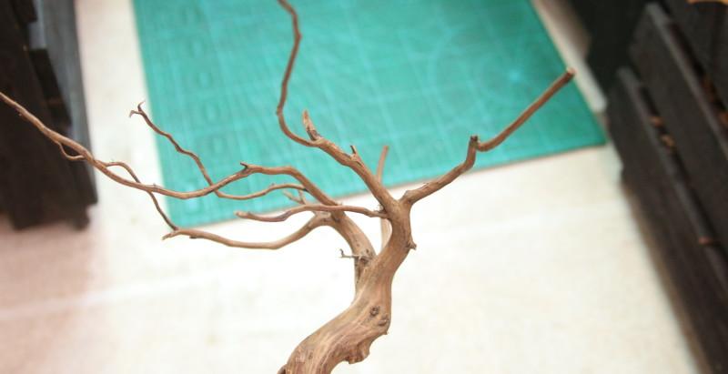 プレミアム枝流木入荷