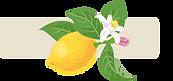 レモン1.2.png