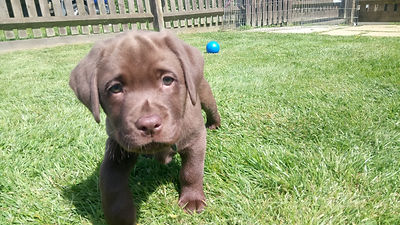 Puppy Training - Find Out More
