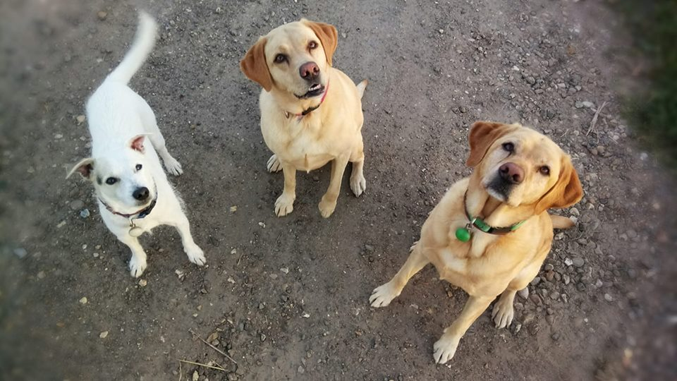 Harvey, Maggie, Lottie