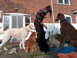 Deacon, Obi, Dala, Ziggy & Archie