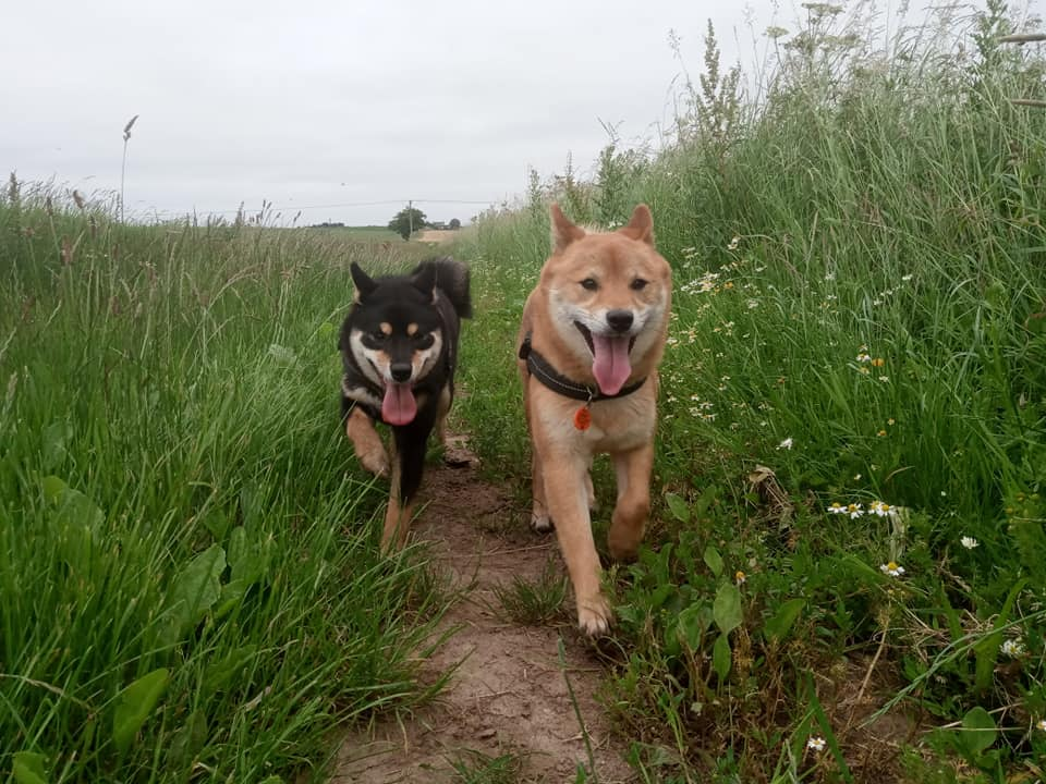 Dala & Obi