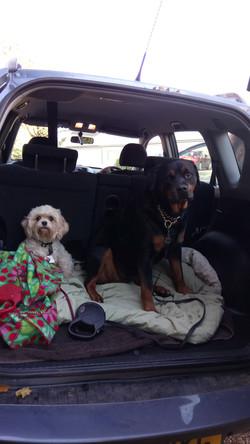 Mishka & Stella