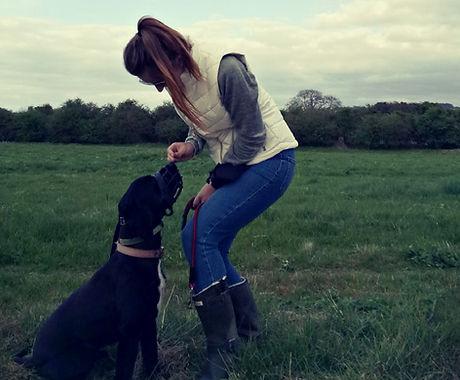 Dog Trainer Holley Training A Spaniel