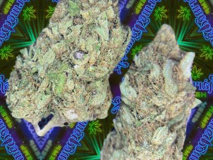 Lifter Premium Hemp Flower