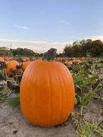 whitetail pumpkin.jpg