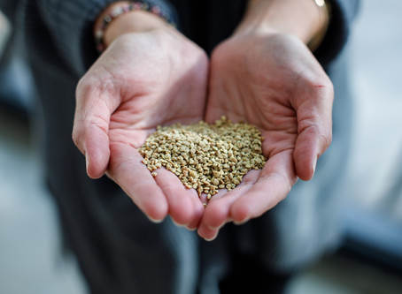 All abuzz about bee pollen - but what is it?