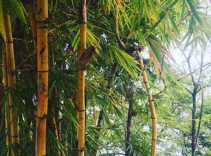 BamboobyAura.jpg