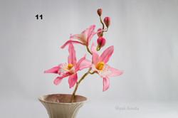 цукрові орхідеї