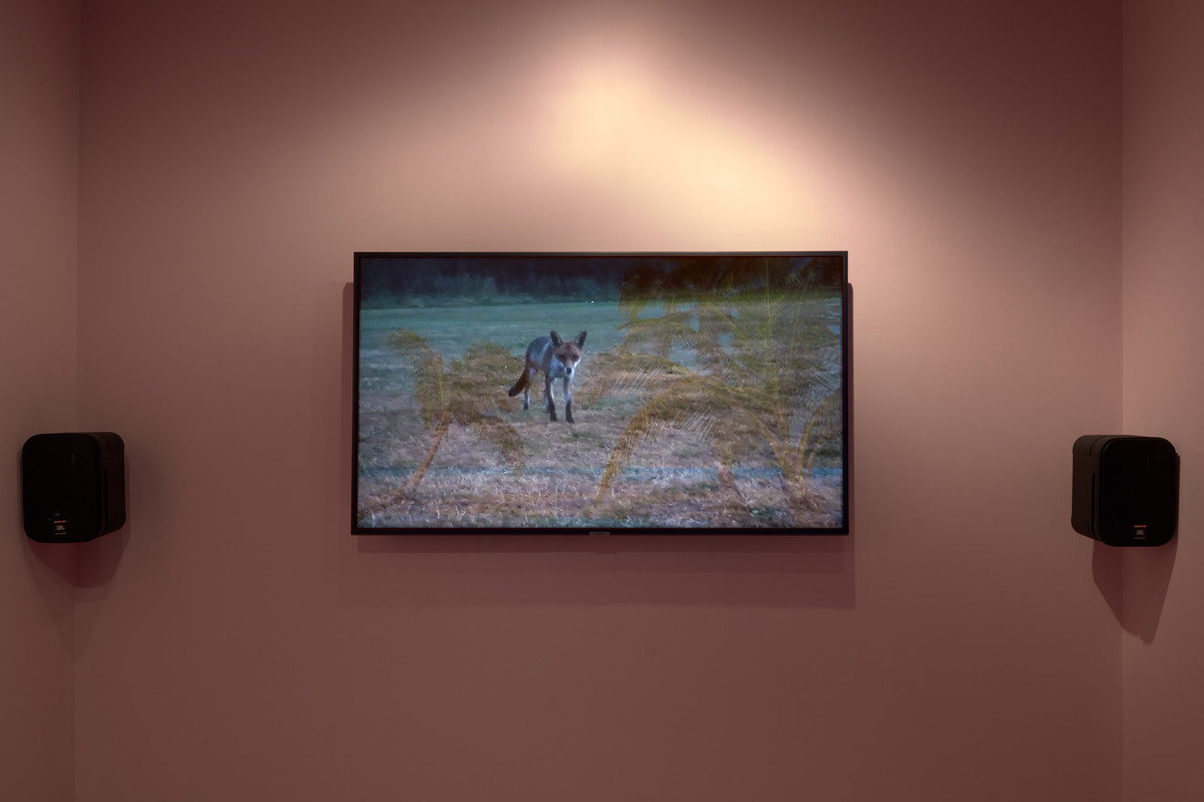 Laure Prouvost, Grandma's Dream, 2014